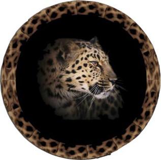 Leopard Coaster a