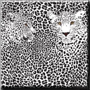 Leopard Coaster b