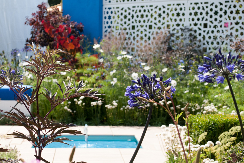 Jenny Blanc Blog - Blue Agapathus