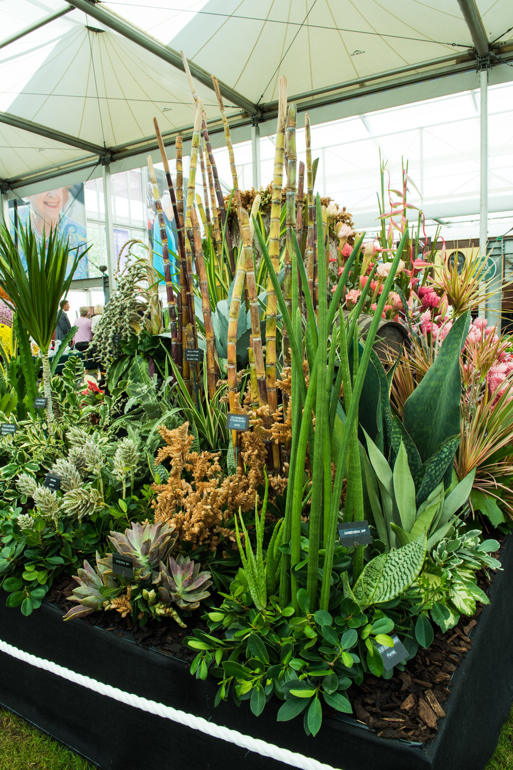 Jenny Blanc Blog - Flowers and Foliage Display