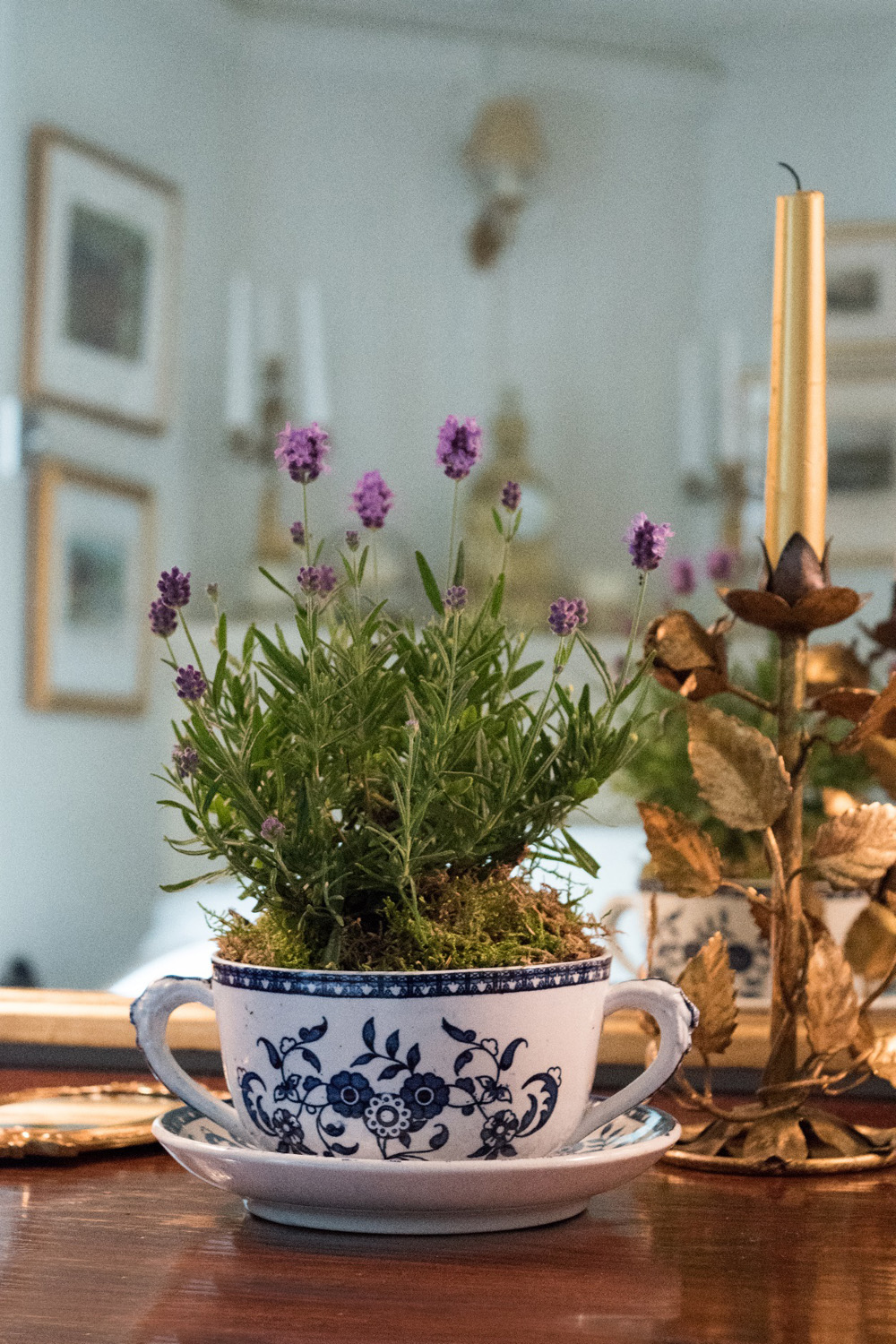Jenny blanc Blog - Teacup Planter