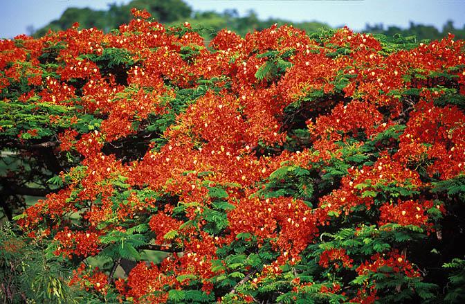 Jenny Blanc Blog - Beautiful plants in full flower