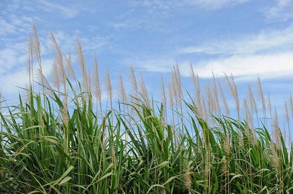 Jenny Blanc Blog - Harvest crops growing