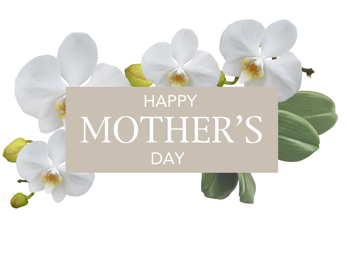 Jenny Blanc Blog - Happy Mothers Day Image